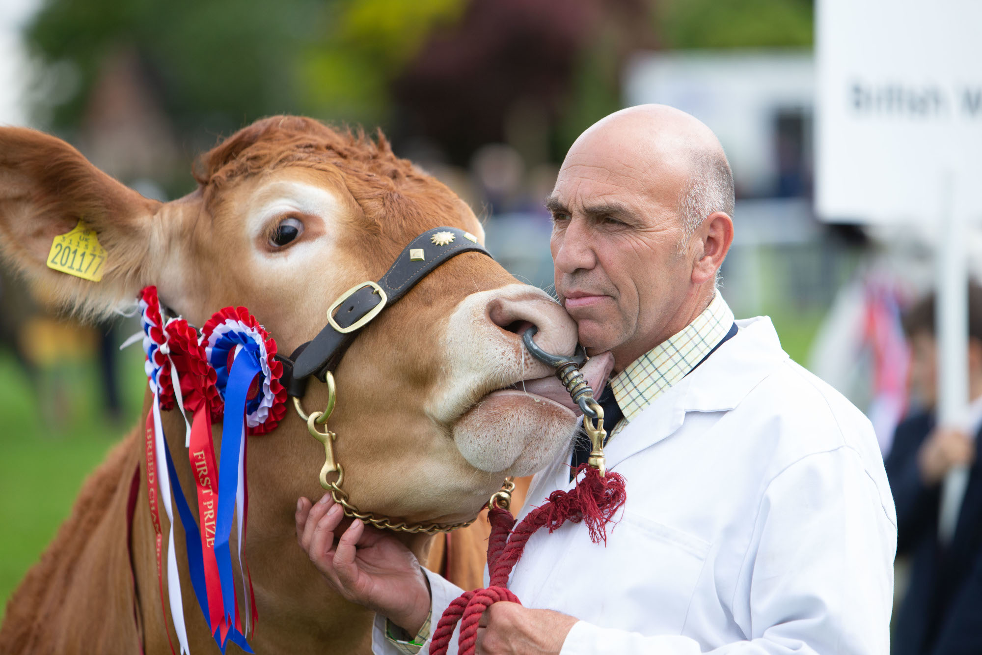 Royal Three Counties Show - Richard Bartle and his prize cow.jpg