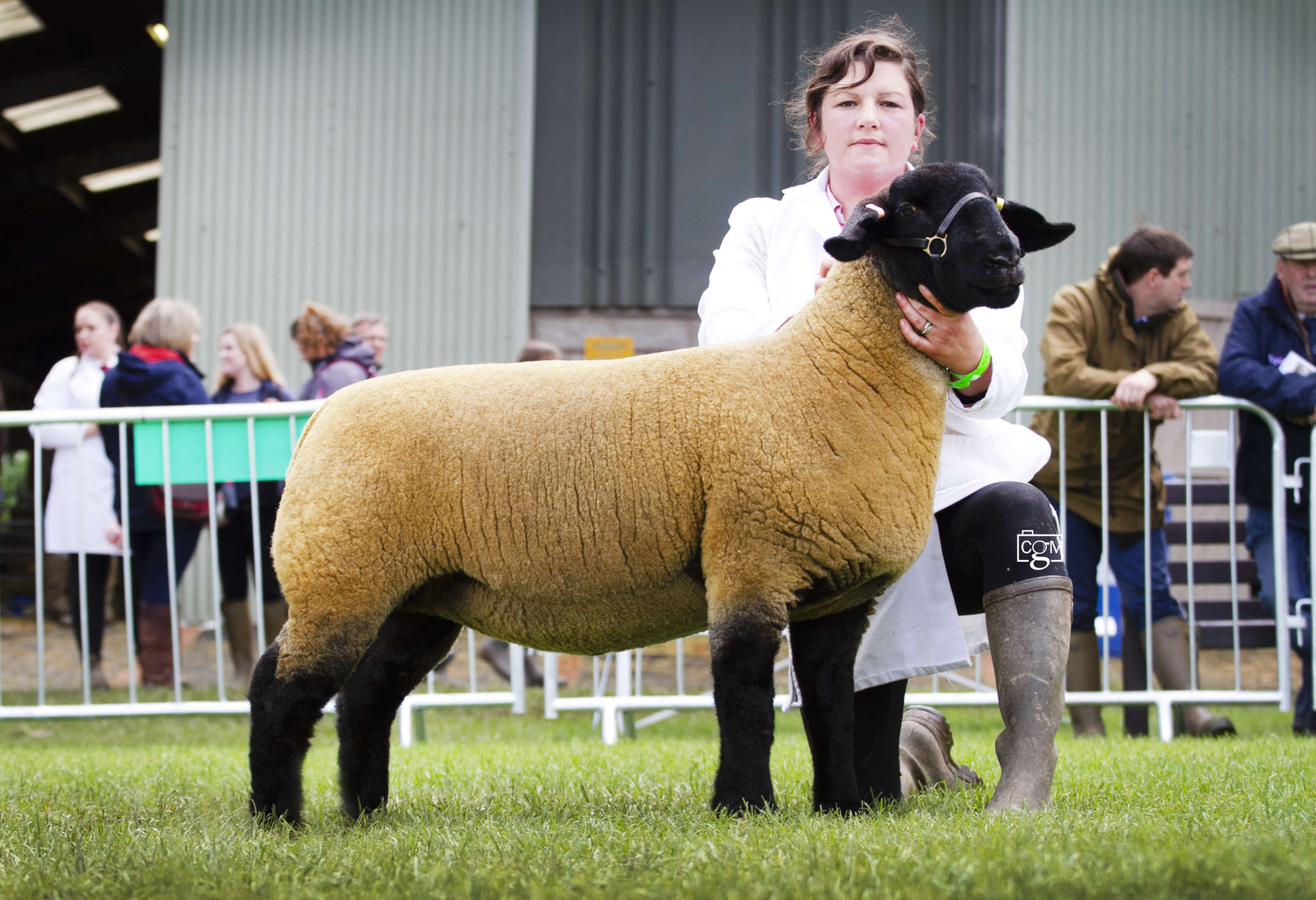 Royal Three Counties Show - Sheep Interbreed Champion - Suffolk Yearling Ewe from Tom and Aimee Mogford in Devon (C)Chrissie Long.jpg